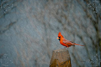 Cardinal Sitting On Wooden Post Poster by Crystal Wightman