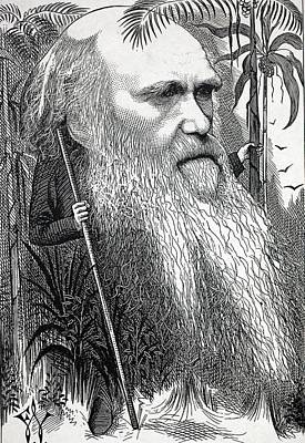 Caricature Of Charles Darwin Poster by Paul D Stewart