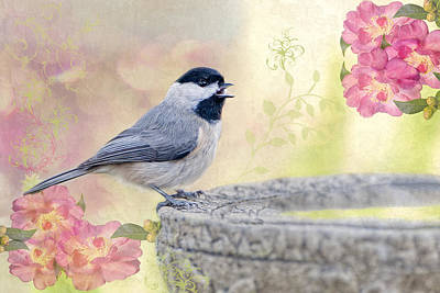 Carolina Chickadee In Camellia Garden Poster by Bonnie Barry