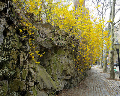Cascade Of Yellow Poster by Muriel Levison Goodwin