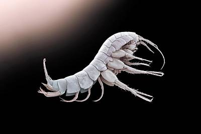 Cave Shrimp Poster by Petr Jan Juracka