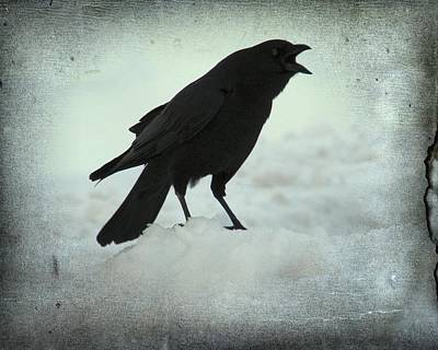Cawing Winter Crow Poster by Gothicrow Images