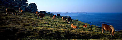Celtic Horses Grazing In A Field Poster by Panoramic Images