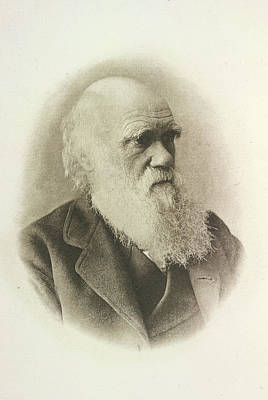 Charles Darwin Poster by British Library