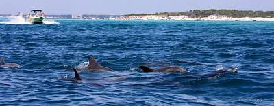 Chasing Dolphins  Poster by Debra Forand