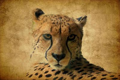 Cheetah  Poster by Athena Mckinzie