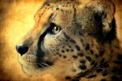 Cheetah Cat Poster by Athena Mckinzie