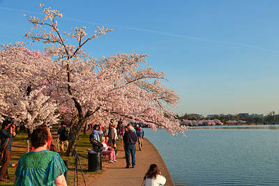 Cherry Blossoms 2013 - 010 Poster by Metro DC Photography