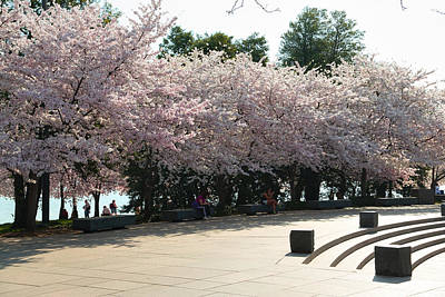 Cherry Blossoms 2013 - 059 Poster by Metro DC Photography
