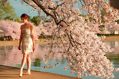 Cherry Blossoms 2013 - 079 Poster by Metro DC Photography