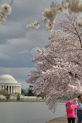 Cherry Blossoms With Jefferson Memorial - Washington Dc - 011311 Poster by DC Photographer