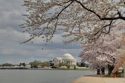 Cherry Blossoms With Jefferson Memorial - Washington Dc - 011317 Poster by DC Photographer
