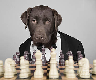 Chess Dog Poster by Justin Paget