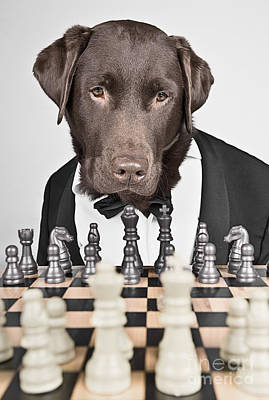 Chess Master Dog Poster by Justin Paget