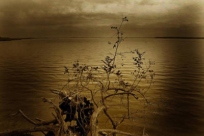 Chester River Sepia Poster by Skip Willits