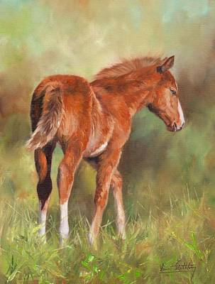 Chestnut Foal Poster by David Stribbling