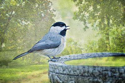 Chickadee  Poster by Bonnie Barry