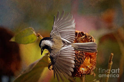 Chickadee With Seed Textured Poster by Sharon Talson