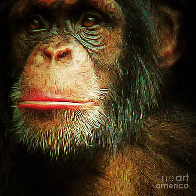 Chimp 20150210brun V3 Square Poster by Wingsdomain Art and Photography