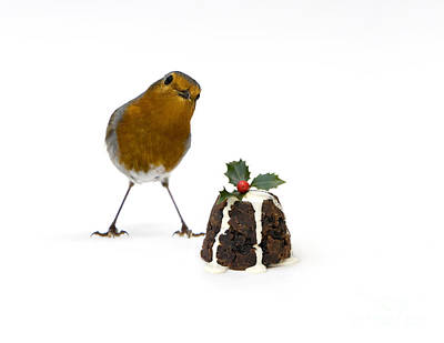 Christmas Robin Poster by Tim Gainey