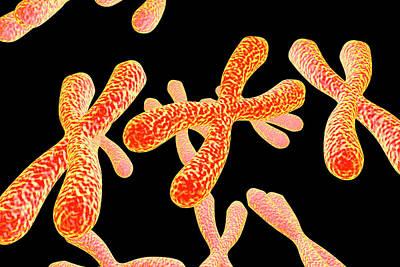 Chromosomes Poster by Kateryna Kon