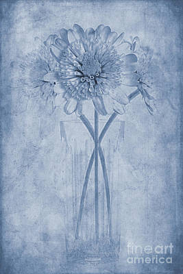 Chrysanthemum Cyanotype Poster by John Edwards