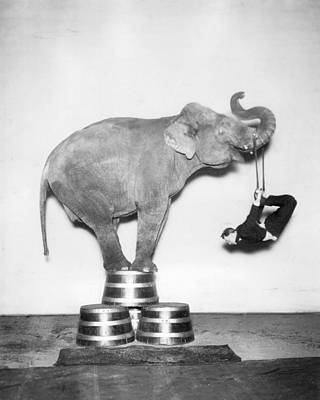Circus Elephant In The Room Bw Poster by MMG Archives
