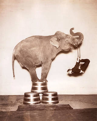 Circus Elephant In The Room Sepia Poster by MMG Archives