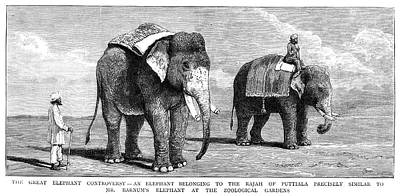 Circus Elephants, 1884 Poster by Granger