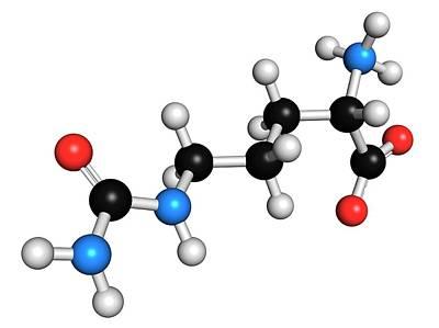 Citrulline Amino Acid Molecule Poster by Molekuul