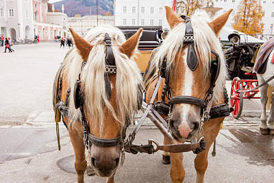Cityscape Horse Carriage Salzburg Poster by Tom Norring