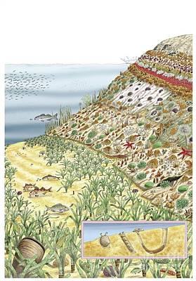 Coastal Wildlife, Artwork Poster by Luis Montanya/marta Montanya/sciencephotolibrary