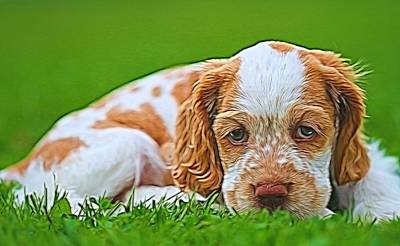 Cocker Spaniel Puppy In Grass Poster by Dan Sproul