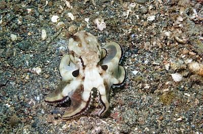 Coconut Octopus Poster by Georgette Douwma