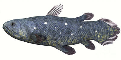 Coelacanth Fish Against White Poster by Corey Ford