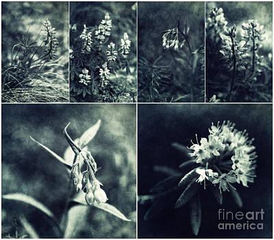 Yukon Wild Flower Collage Poster by Priska Wettstein