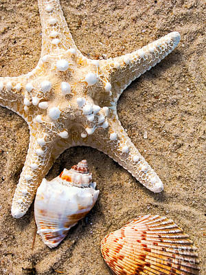 Collecting Shells Poster by Colleen Kammerer
