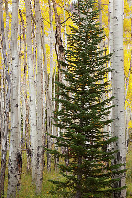 Colorado, Rocky Mountain National Park Poster by Jamie and Judy Wild