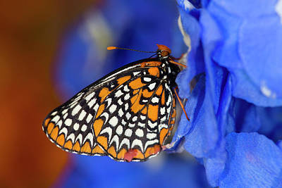 Colorful Baltimore Checkered Spot Poster by Darrell Gulin
