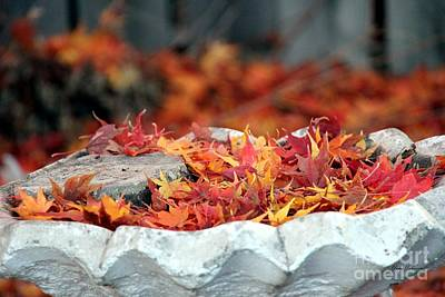 Colorful Bird Bath Poster by Yumi Johnson