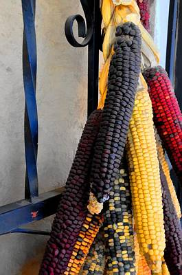 Colorful Corn I Poster by Jan Amiss Photography