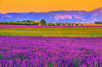 Colors Of Provence Poster by Midori Chan