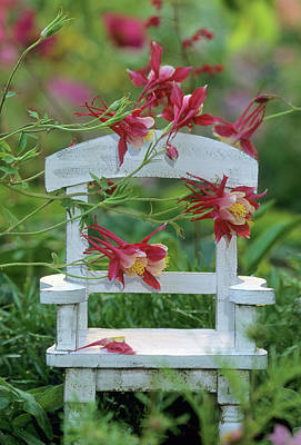 Columbine And Chair In Garden Poster by Jaynes Gallery