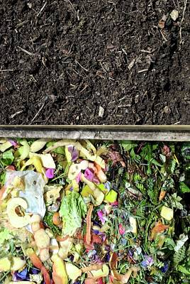 Compost Heap Poster by David Aubrey