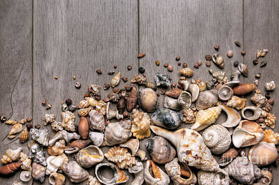 Conchs And Shells Poster by Carlos Caetano