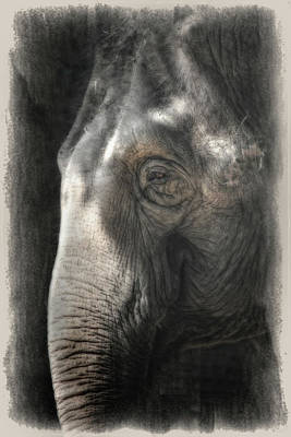 Contemplation Poster by Joan Carroll