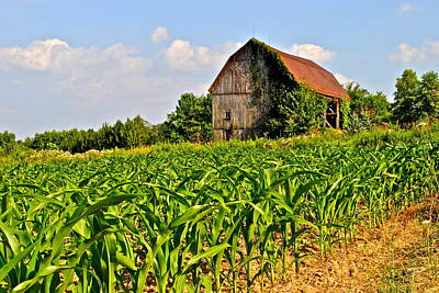 Corn Farm Poster by Frozen in Time Fine Art Photography