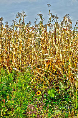 Cornfield Poster by Baywest Imaging