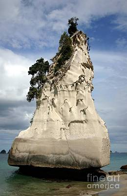 Coromandel Rock Poster by Barbie Corbett-Newmin