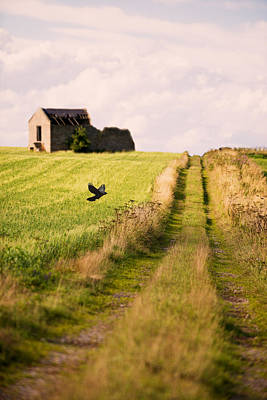 Country Lane Poster by Amanda Elwell